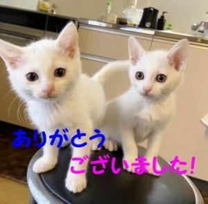 Photo_20210203205301